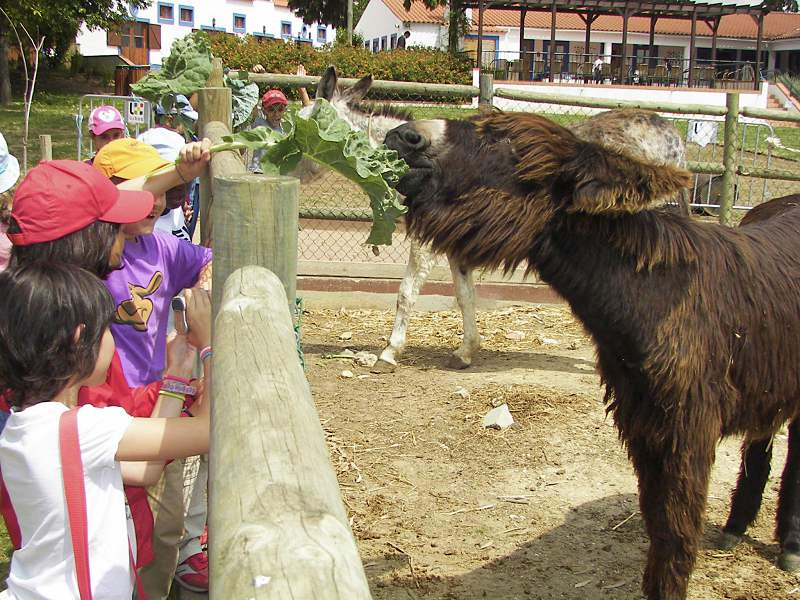 O que fazer em Lisboa com crianças